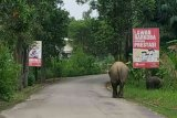 Aksi Gajah Seruni dan Rimba bermain menarik perhatian