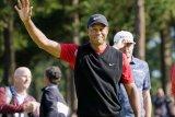 Tiger Woods kembali menolak ikut turnamen golf di Arab Saudi