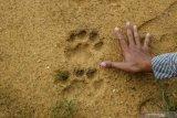 Warga Dumai diimbau teliti sebar info terkait harimau