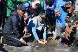 Wagub NTB pimpin menanam bakau pada Gerakan Save Teluk Bima