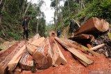 Polisi tindak lanjuti kasus pembalakan liar di kawasan hutan konservasi