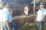 Pemprov Sumsel  akan jadikan OKU Timur lumbung sapi