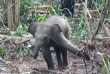 KLHK berhasil tekan konflik hutan tanaman industri
