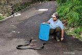 Begini penanganan pertama gigitan ular