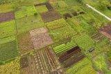 TW I 2020, Pertanian dan Industri Pengolahan Diprediksi Meningkat