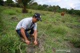 Desa Makmur Peduli Api di Musi Banyuasin sukses ternak sapi