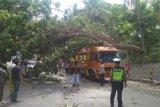 Pohon tumbang ke jalur pantura Situbondo timpa truk yang melintas