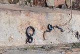 Sleman sediakan serum anti-bisa ular di 10 puskesmas
