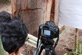 Peneliti Universitas Riau mengamati perilaku lebah saat gerhana matahari