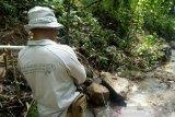 Jarak serangan harimau di Muara Enim hanya 100 meter dari pemukiman