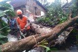 Belasan rumah rusak dan pohon tumbang diterjang angin kencang di Jember