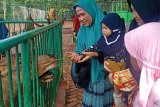 Libur akhir tahun, Tahura Sultan Adam diserbu wisatawan