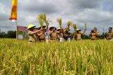 Produktivitas padi Kota Metro 7 ton per hektare