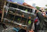 Polisi menunjukkan barang bukti satwa burung di Polairud Polda Jawa Timur, Surabaya, Jawa Timur, Selasa (31/12/2019). Polairud Polda Jawa Timur menangkap lima tersangka kasus dugaan penyelundupan satwa burung dilindungi dan mengamankan barang bukti 201 ekor burung Cucak Hijau (Chloropsis sonnerati) dalam kondisi hidup, empat ekor burung Cucak Hijau (Chloropsis sonnerati) dalam kondisi mati dan dua ekor burung Cucak Jenggot (Alophoixus bres) dalam kondisi hidup. Antara Jatim/Didik/ZK