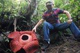 BKSDA : Raflesia ditemukan 14 kabupaten/kota di Sumbar