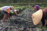 BPS: Nilai tukar petani naik tipis 0,56 persen
