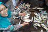 Pakar pangan Universitas Jember paparkan tips mencegah keracunan ikan tongkol