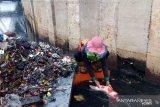 Ada ikan koi seberat tiga kilogram ditemukan saat bersih-bersih sampah sisa banjir Jakarta