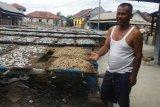 Produksi teri nasi di Pulau Pasaran Lampung turun