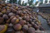 Produksi buah kelapa Sulut capai 275.493 ton