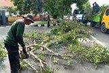 Disperkim Mataram memangkas pohon pelindung antisipasi cuaca ekstrem