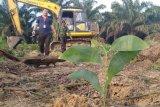 Terkait putusan MA lahan di Gondai, Kejari Pelalawan sebut eksekusi tetap dilaksanakan