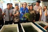 Dirjen KKP: 840.000 ha belum termanfaatkan untuk rumput laut