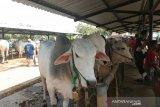 Pemkab semprotkan desinfektan di pasar hewan untuk antisipasi antraks