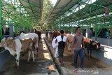 Kulon Progo mengintensifkan pengawasan lalu lintas ternak di pasar hewan