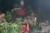 Polisi sebut tanaman ganja di lahan BKSDA Garut diduga sengaja ditanam