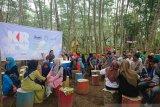 Hutan albasia Desa Kuala Dua diubah jadi kawasan wisata baru
