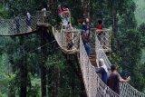 Wisata alam jembatan hutan