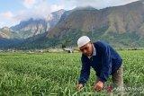 BNI mengucurkan KUR Rp47,5 miliar untuk petani bawang putih di NTB
