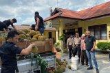 Selundupkan 254 kilogram ganja via truk pengangkut durian digagalkan polisi