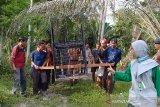 BBKSDA Riau dan polisi selamatkan anak beruang dari jerat, begini kronologinya