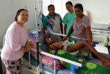 Cerita dokter Maharani, penyelamat korban gigitan ular langka di Lembata
