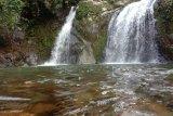 Anggrek Putih jadi ikon objek wisata Air Terjun Palano di Pesisir Selatan