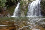 White orchid becomes icon of tourist attraction Air Terjun Palano in Pesisir Selatan