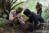 Masih berkeliaran, BKSDA imbau warga tidak beraktifitas di lokasi harimau terkam sapi