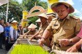 Gubenur terapkan pola tanam padi di Metro ke kabupaten lain
