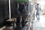 Virus corona merebak, kelelawar tetap dicari untuk pengobatan alternatif di Solo
