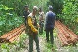 BKSDA Sulawesi Tenggara amankan puluhan batang kayu bayam ilegal