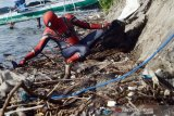 'Spiderman' bersih-bersih pantai