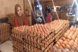 Harga telur ayam di Pasar Youtefa Jayapura Rp57 ribu/rak