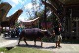 Destinasi wisata Toraja Utara mendukung wisata halal