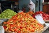 Di Palu, petani gembira  sambut harga cabai  kembali naik