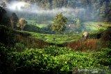 23 piton dan cobra dilepas liar  di Taman Nasional Gunung Halimun Salak