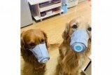Cegah Corona, anjing di China pun gunakan masker