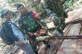 Ratusan balok kayu diduga hasil pembalakan liar di Bima diamankan TNI