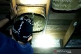 Harga sarang walet merosot imbas wabah virus corona